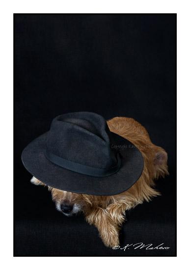 scottish terrier_005