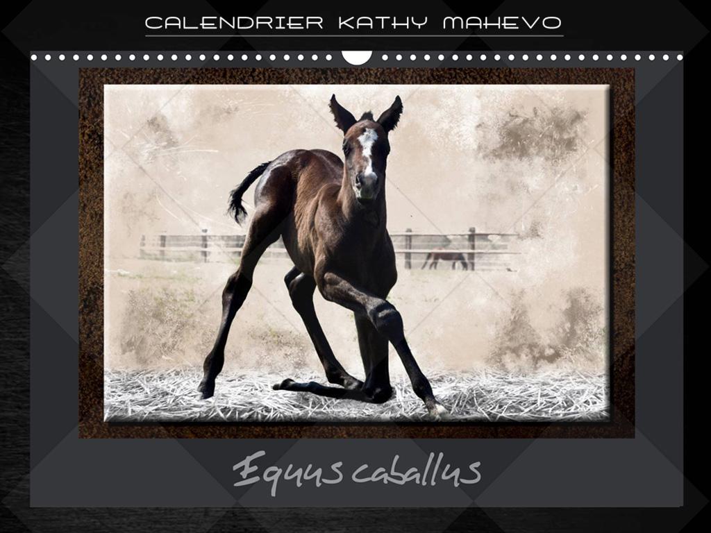 006 equus caballus 1