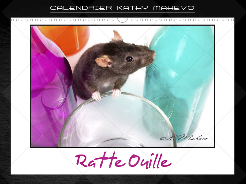 007 ratte ouille